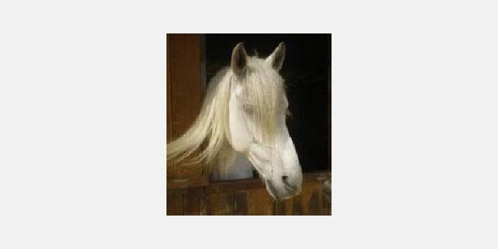Montar a caballo en Valdemanco
